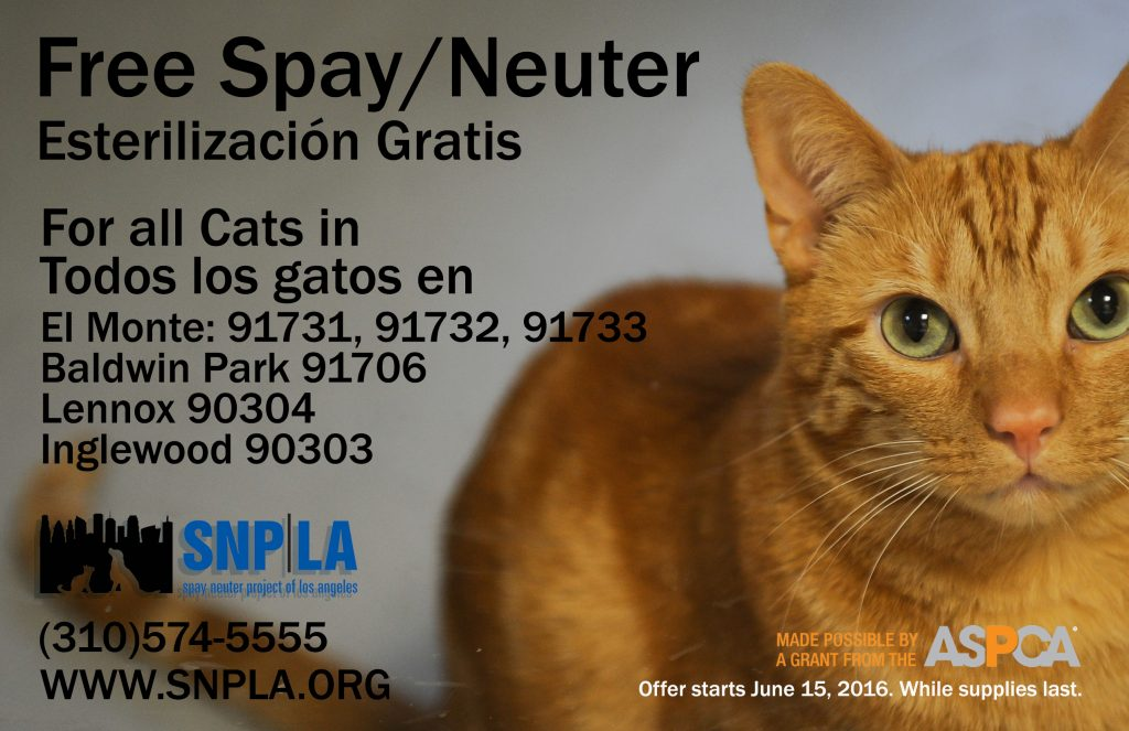 aspca cats only 2016 flyer WEB