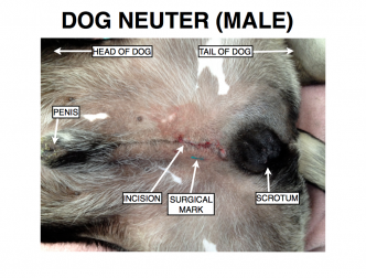 dog neuter.jpeg